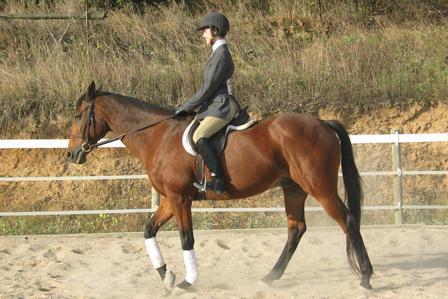 Equestrian Club Sports Carleton College