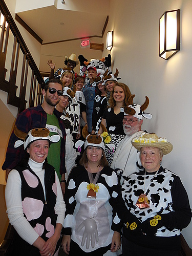 Admissions Staff as Cows