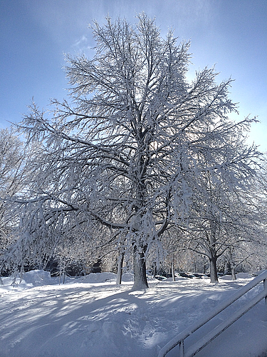 Seeing the snow on the trees was breathtaking!