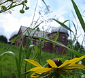 A sunflower grows in front of the Goodsell Observatory