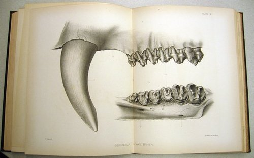 USGS Illustration - Mammal Jaw