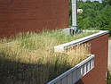 Carleton's green roof