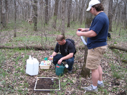 Field Ecology worm lab