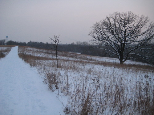 Hillside prairie in winter