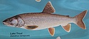 Lake trout from poster of Fishes of the Great Lakes.