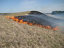 Prescribed burn at McKnight Prairie