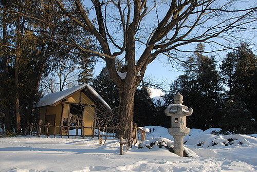 Japenese Garden in winter