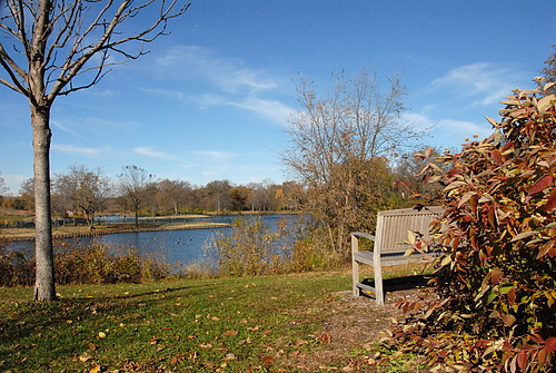 Bench at Lyman Lake