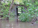 The old cattle tunnel into the arb flooded after the September rainstorms.