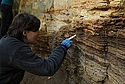 Sarah Berry examining beds in the Mill Street outcrop.