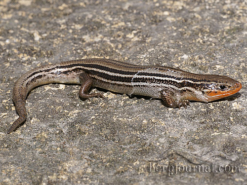 More information on Arboretum Snakes and Lizards | Cowling ...