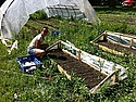 Tori Ostenso'15 working on Carleton's Farm