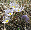 Flowers in the Arb will start appearing in the spring and the summer, once the ground thaws again.
