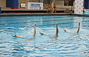 Synchronized Swimming Nationals