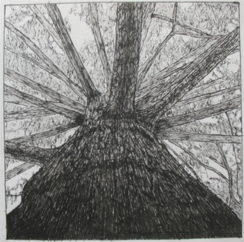 Pen Study Of Tree By Mark Luterra 07 Cowling Arboretum