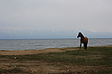 Horse on the shore of Baikal