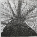 Pen study of tree by Mark Luterra '07