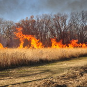 The Arb Crew does a prescribed burn in Fall 2011.
