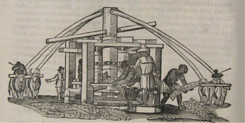 <strong>Figure 3.</strong> <em>Ox-Driven Sugarmill in Brazil</em>, 1648
