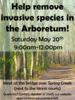 Volunteer in the Arb! May 20th, 9:00am-12:00pm.