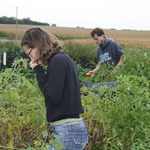 Gleaning, Fall 2010.