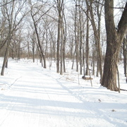 Upper Arb trail in winter