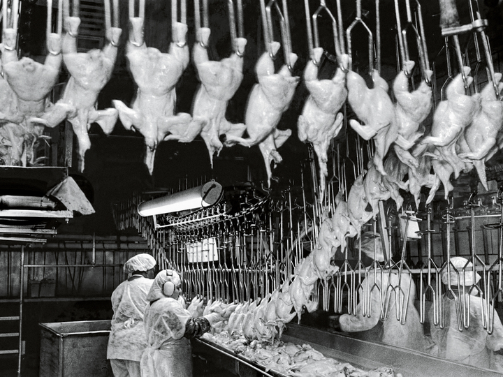 poultry factory