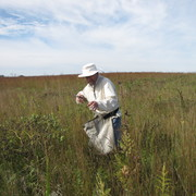 Seed Collection in the Arb.