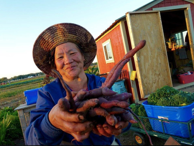 A farm worker holds a bunch of purple carrots outside her toolshed