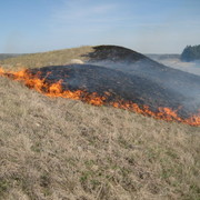 Imaged of prescribed burning for grasslands management in the Cowling Arboretum.