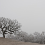 Hill of Three Oaks - Winter