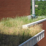 Growing Green Roof
