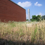 Grasses grow tall on the roof