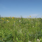 The Arboretum Prairie in July