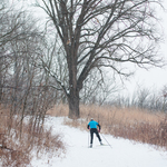 Skiing in the Arb