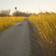Runners with Water Tower in the Lower Arb