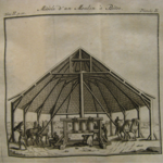 <strong>Figure 12.</strong> Plate 2 from Philip Fermin, <em>Description generale…</em>, 1769