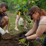 Tree planting in the Arb