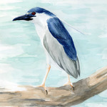 Black-crowned Night-Heron by Lauren Jarocha, '09