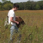 Arb Crew gathering seeds in the prairie.