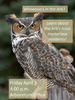 Whooo's in the Arboretum? Owl talk by Gene Bauer